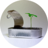 Start up redondita DEGRADADA
